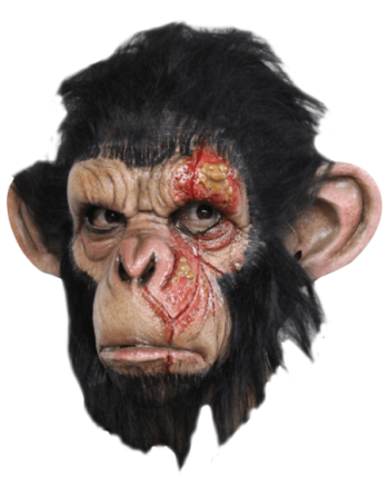 Infected Chimp