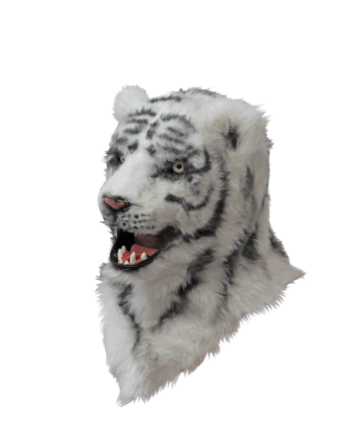 White tiger moving mouth