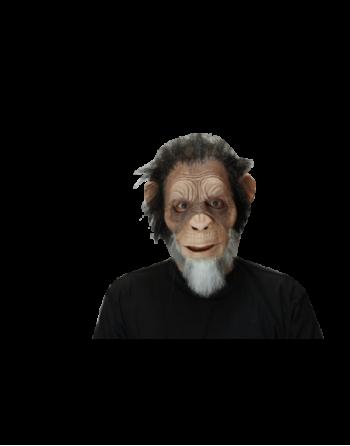 Old julius ape
